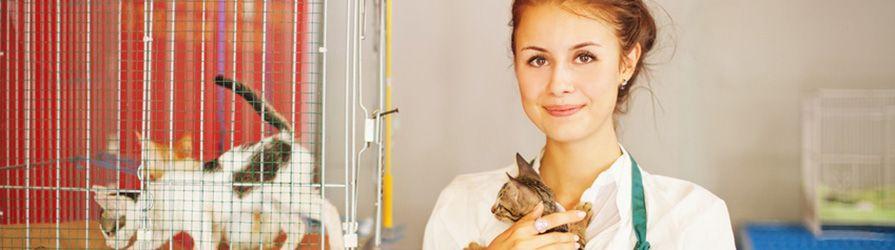 Tiermedizinische Fachangestellte